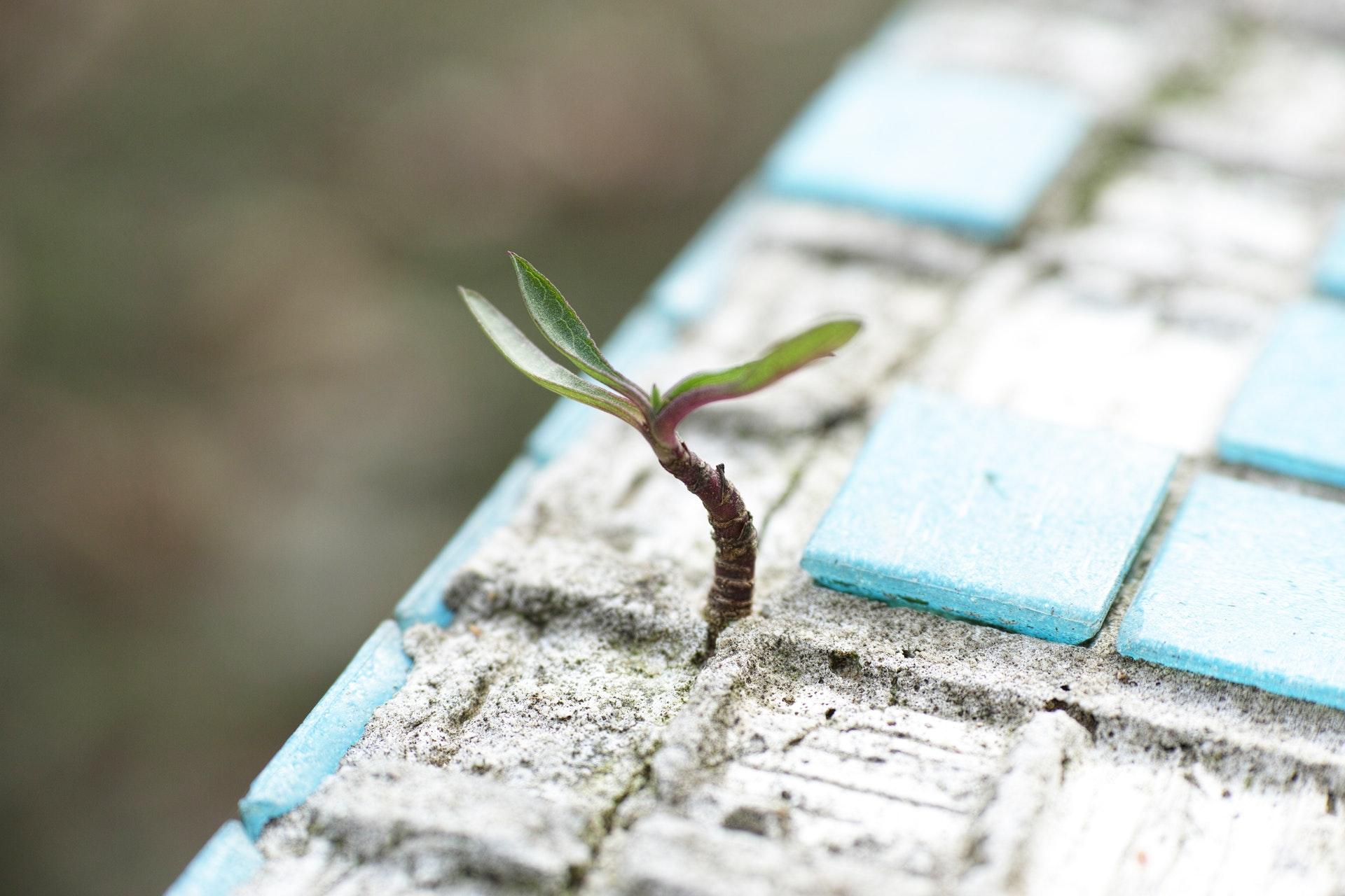 Дарить крылья надежды